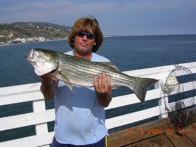 Malibu Pier Striped Bass 2005