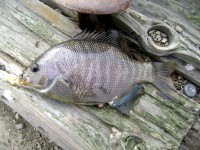 Blackperch_Fort_Point