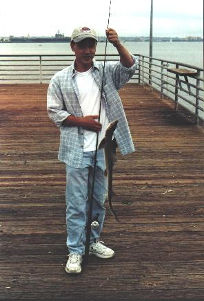 Gray.Smoothhound_Ferry.Landing_2001_Rich.Reano_2
