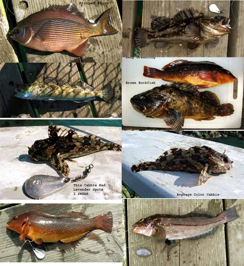 Fish_Trinidad_Pier_2006