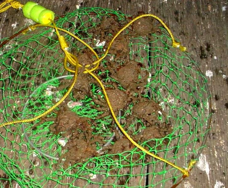 Baby_crabs_Domphaben_2004_Goleta