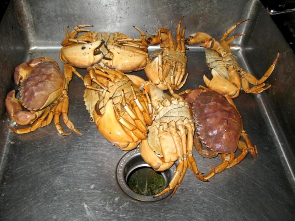 Crabs_Hashem_SM_Pier_1_09