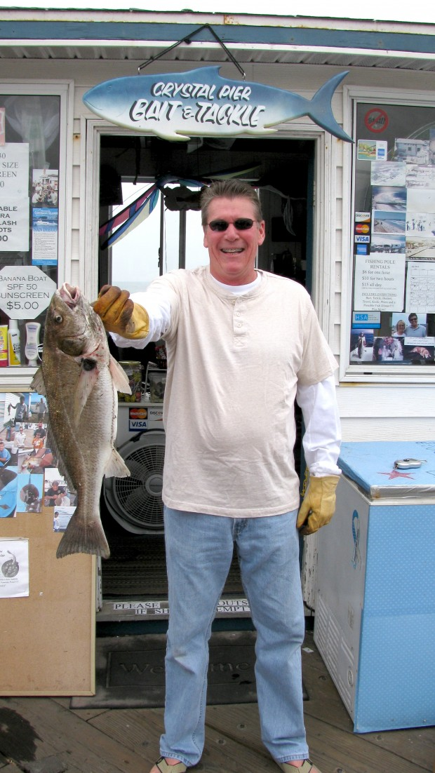 Spotfin croaker for Crystal pier fishing