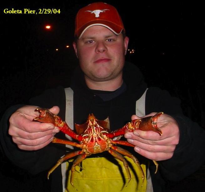Kelp.Crab_Goleta_2004_DomphaDan