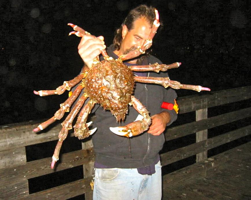 Spider_Crab_7.3.07_Cayucos_Pier