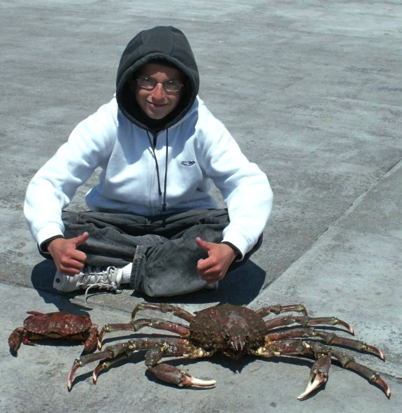 RSP_Daniels_giant_spider_crab_2007