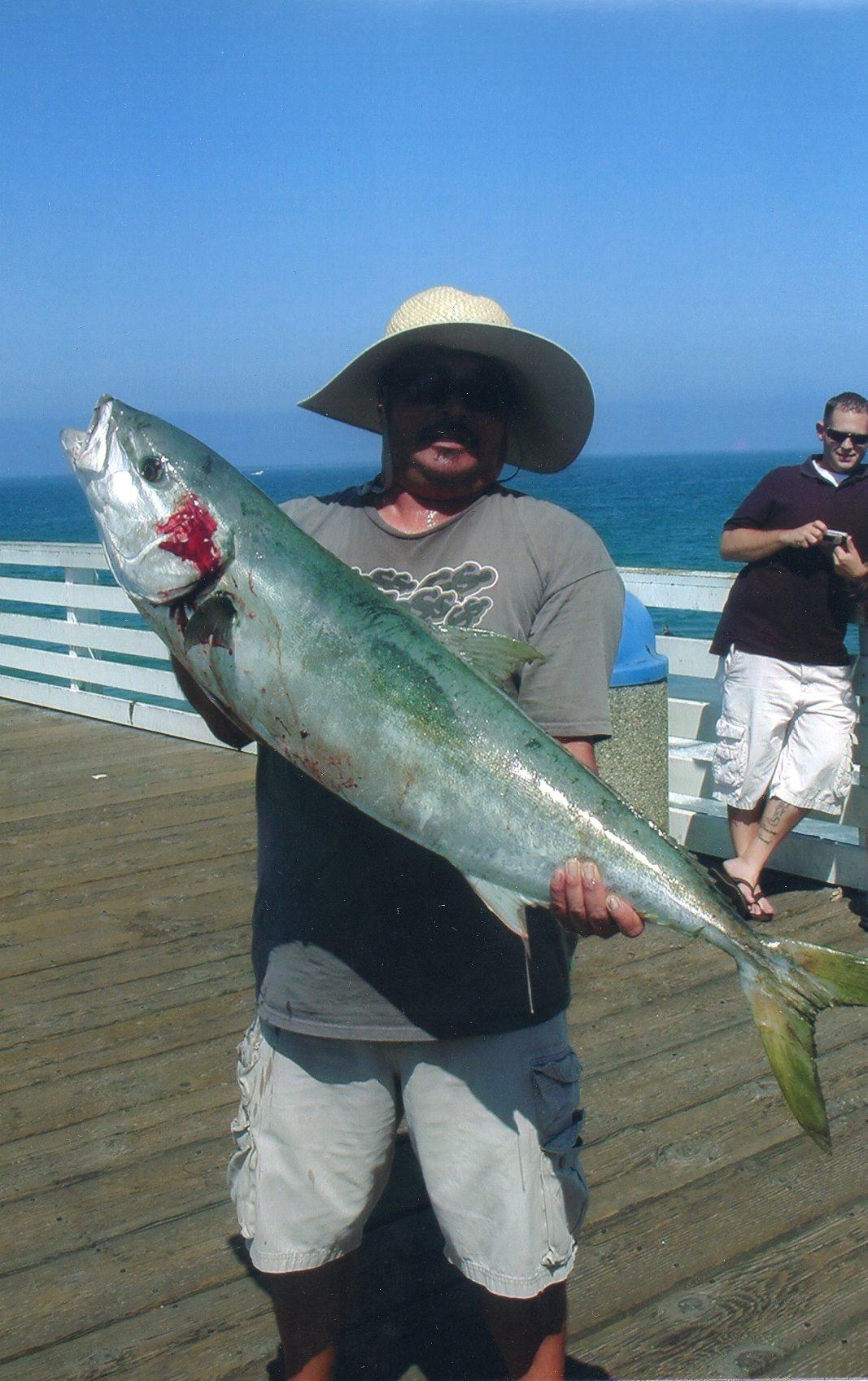 Crystal pier yellowtail 8 2012 for Jones beach fishing pier