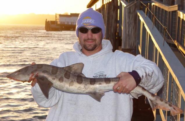 Leopard.Shark_Tides.Wharf_2004_1