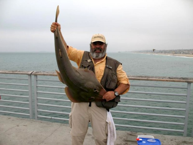 Shovelnose guitarfish for Jones beach fishing pier