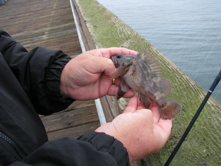 B.Rockfish_Goleta_2010_10.24