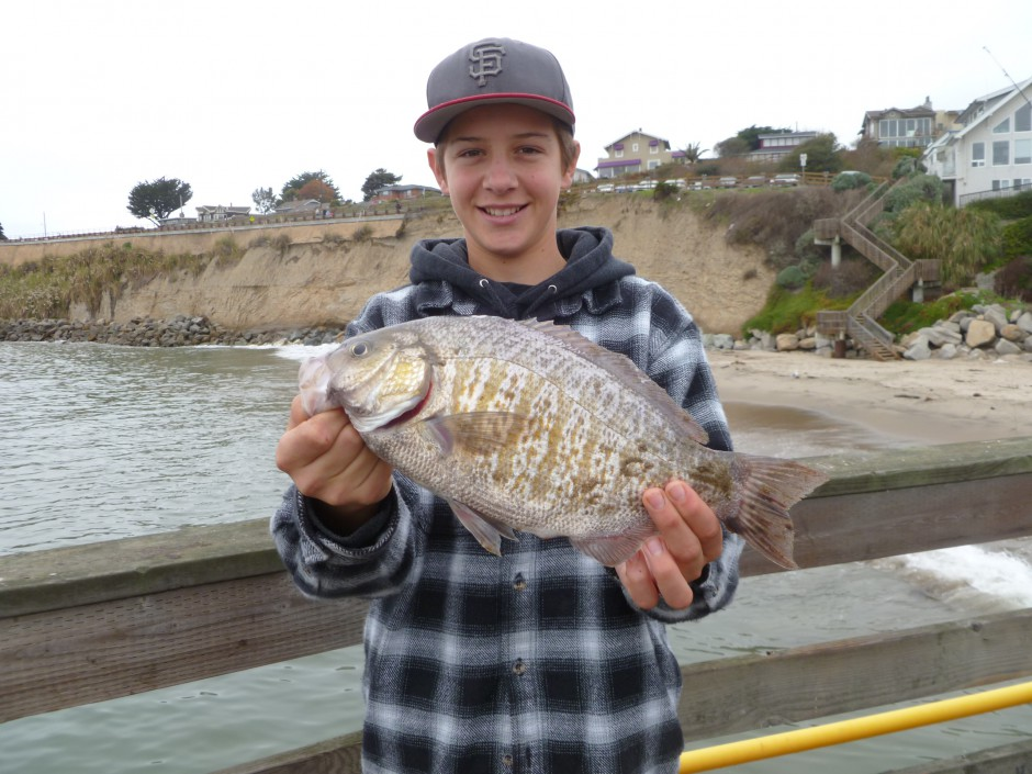 Barred.Perch_Capitola_2012_2