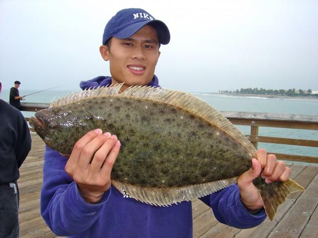 California halibut for Sf bay halibut fishing
