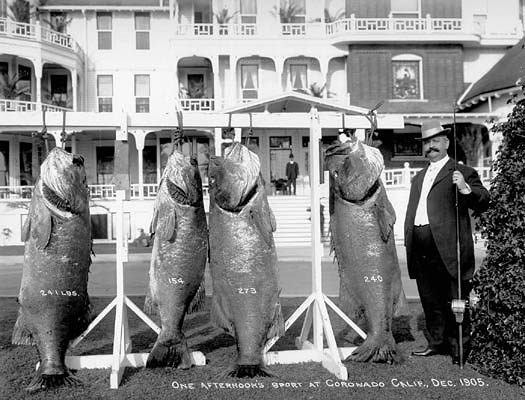 Black_Sea_Bass_1905