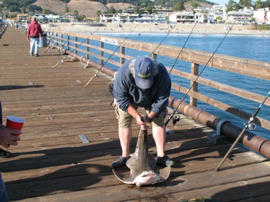 Avila_2008_Gordo_A.Shark2