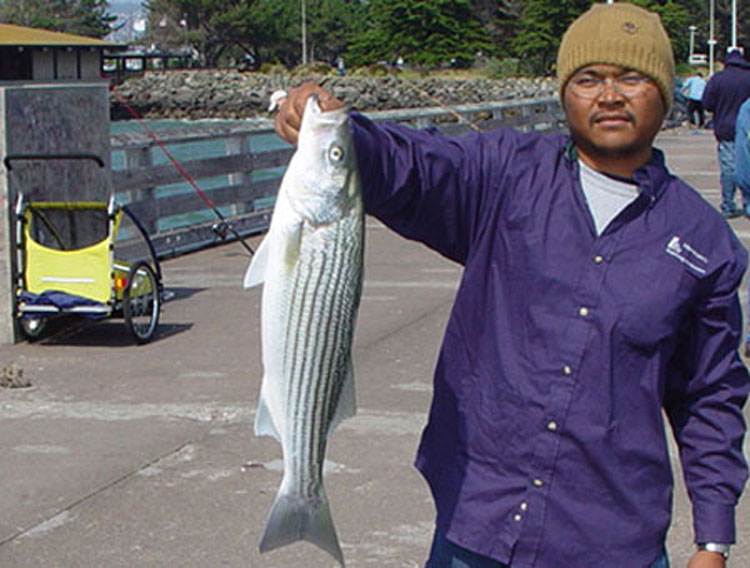 Striped.Bass_Berkeley_2003