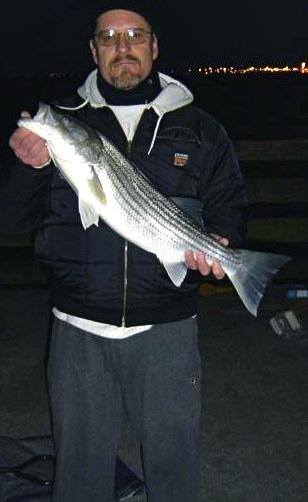Striped.Bass_Berkeley_2006