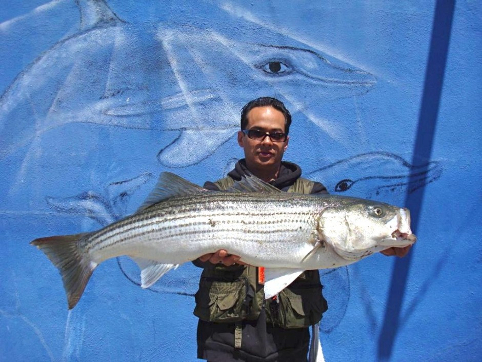 Striped_Bass2_Fort_Point