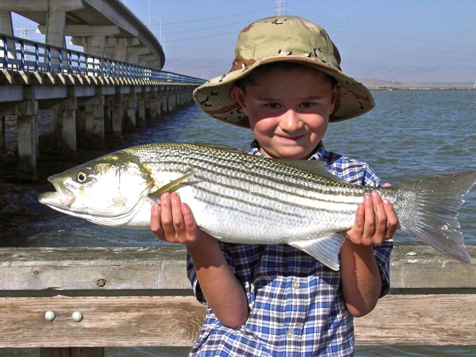 Striped_Bass_Dumbarton.P_2005.Thomas.O