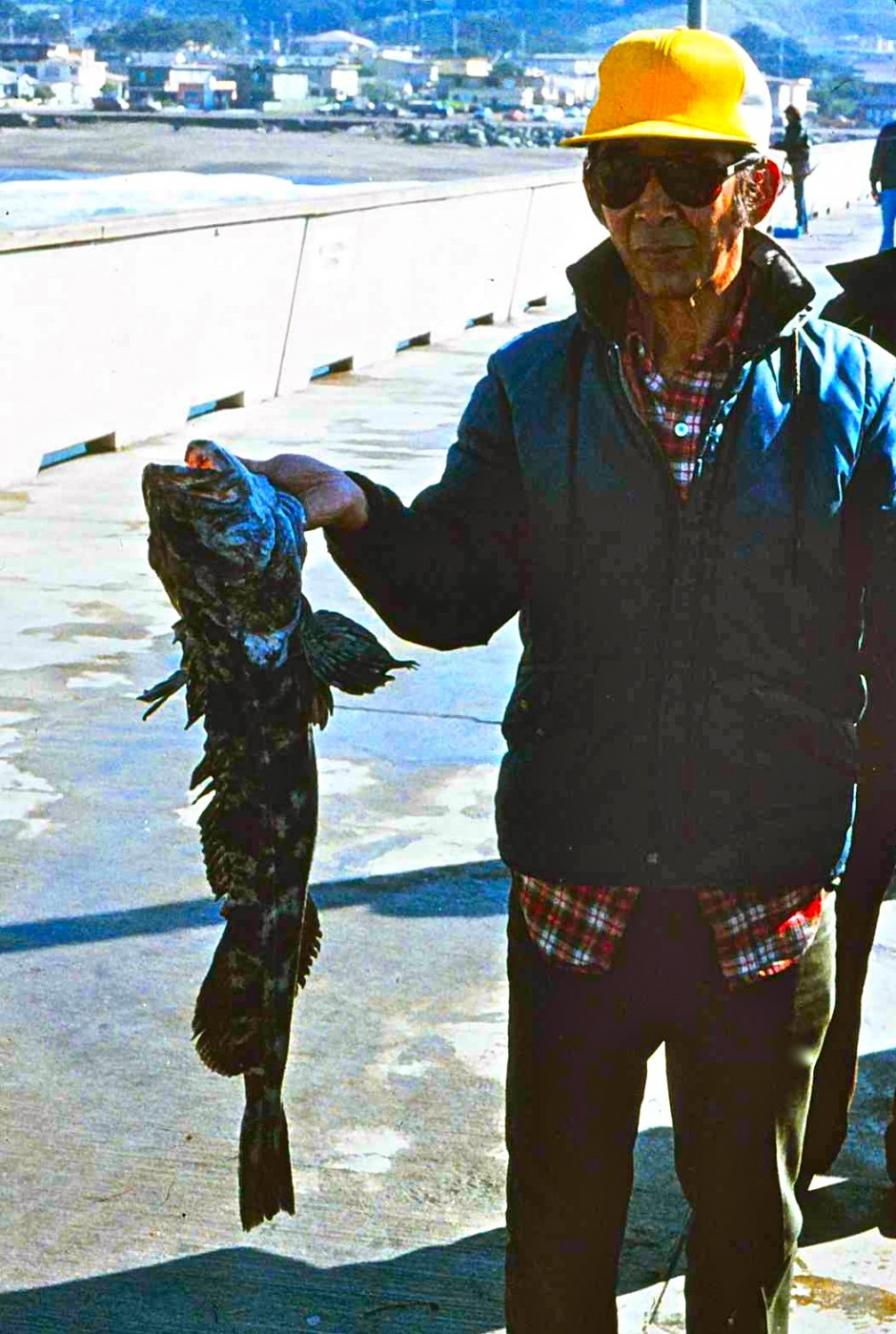 Lingcod_Pacifica_1997_1a