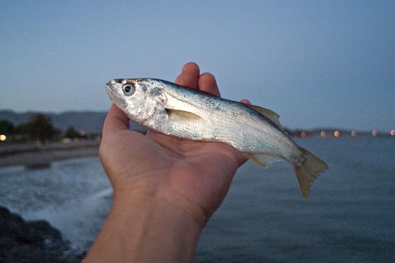 Queenfish_Ventura_2011