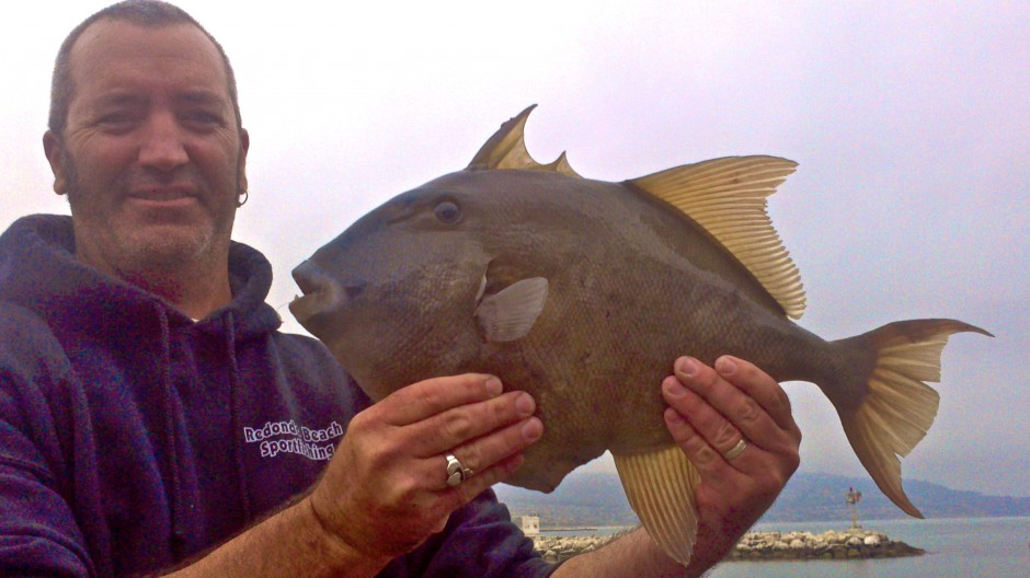 Triggerfish_RSP_2012_6.21_1a