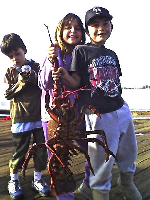 3a. Lobsterilla