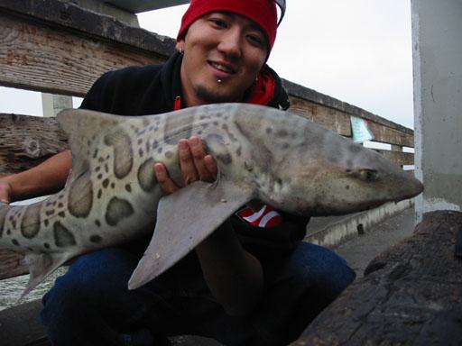 Leopard_Shark_Dumbarton_Pier_2004