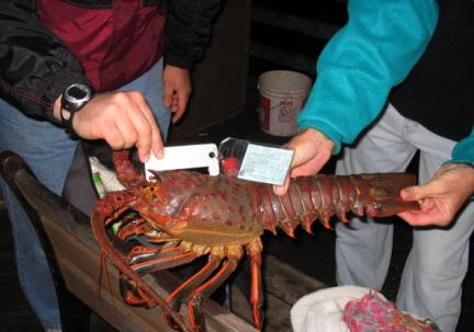 Lobster_Oceanside_2005_1.15_1