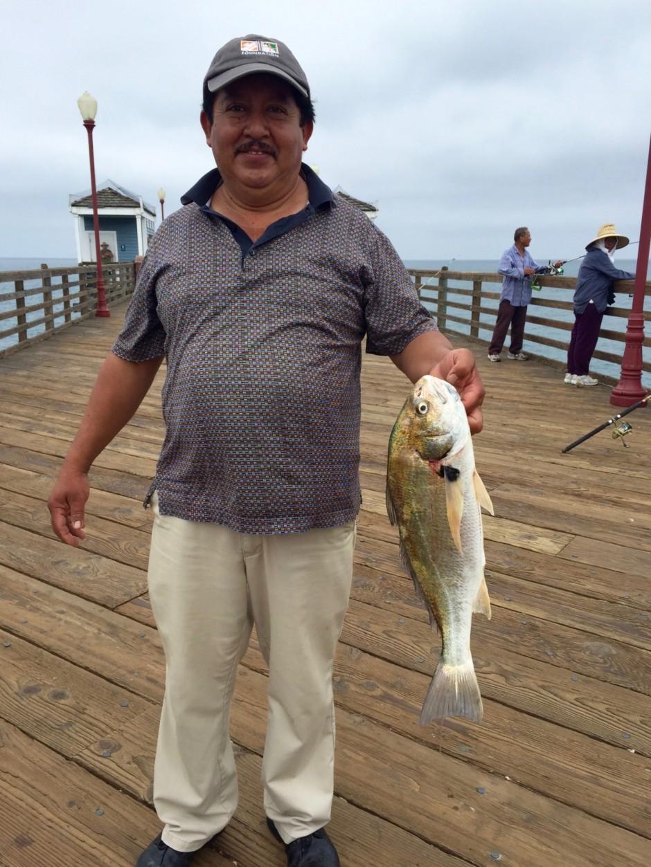 Spotfin.Croaker_Oceanside.P_2015.8_Humberto