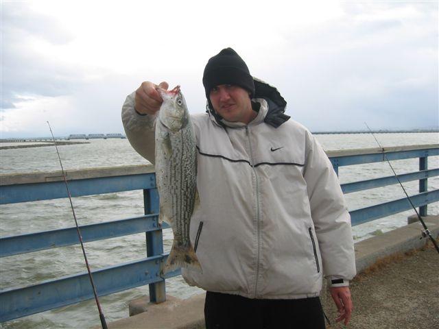 Striped_Bass_Dumbarton_2006
