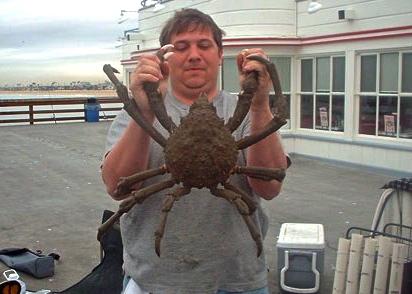 S.Crab_Balboa_2004