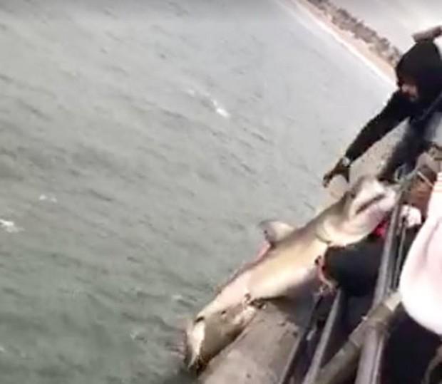 Ken jones writer pierfisherman for Huntington beach pier fishing