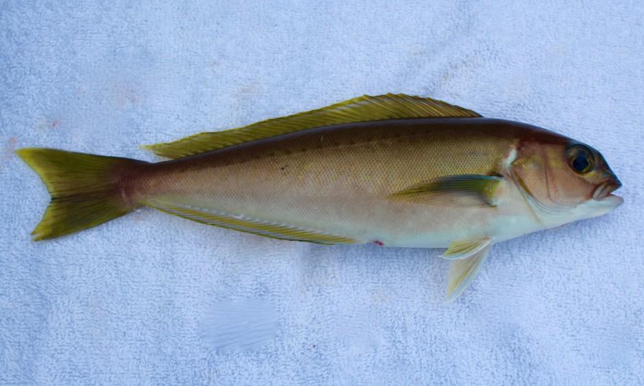 IMG_1422_Ocean.Whitefish