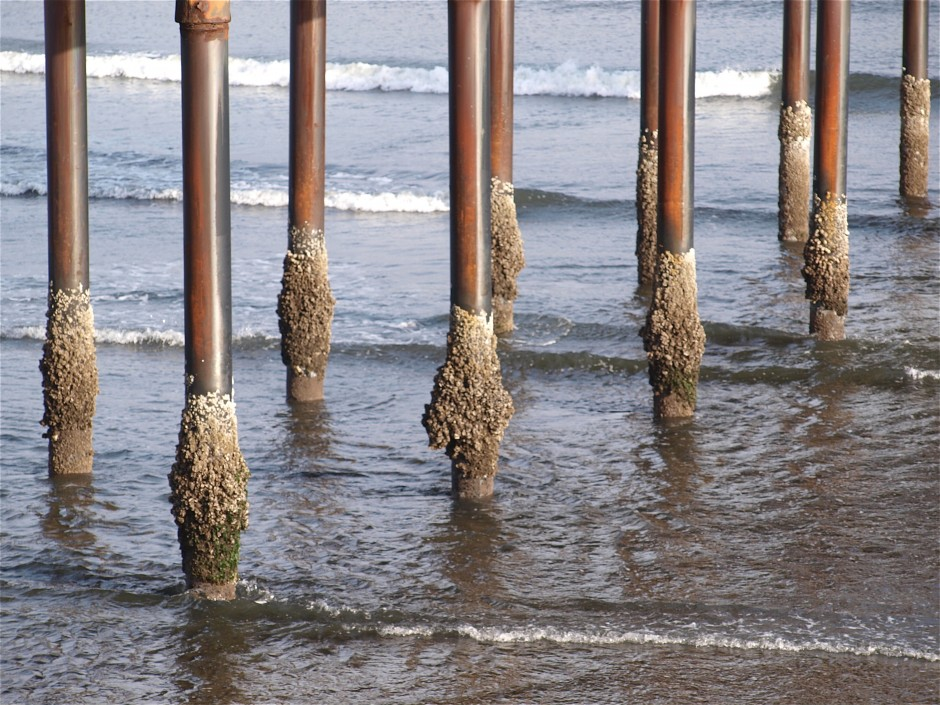 Ken jones writer pierfisherman for Pier piling