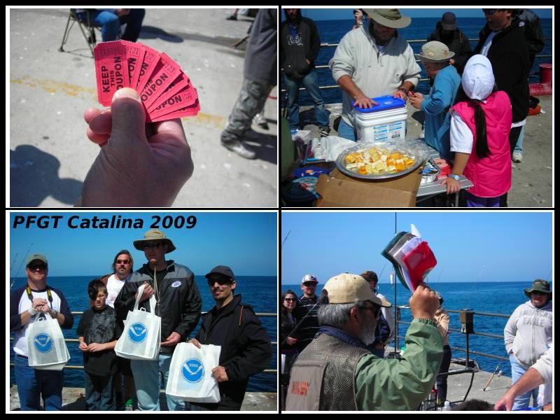 Cat_2009_Mole_Collage3