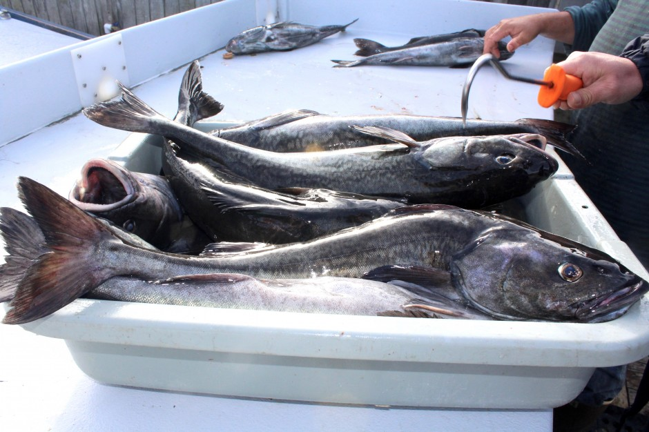 Newport.Dory_2018.3_Sablefish.2_X